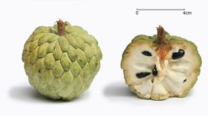 Seetaphal or custard-apple