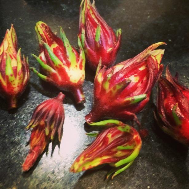 Calyx of roselle (Hibiscus sabdariffa)