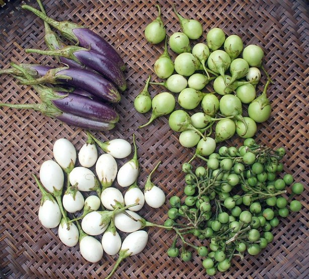 Four kinds of eggplants (source: Thai food blog on Flickr under Creative Commons License)